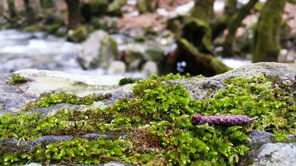 Moss, Nature, Leaves, Beautiful, Peace, Forest, Tree