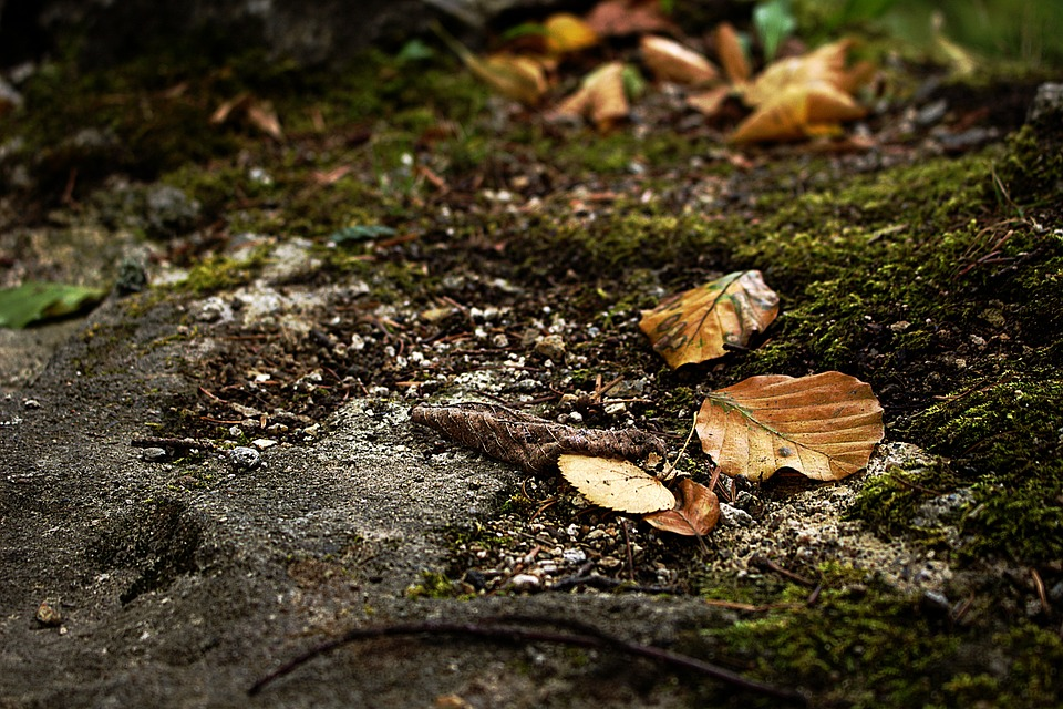 Leaves, Autumn, Forest, Forest Floor, Beech Wood