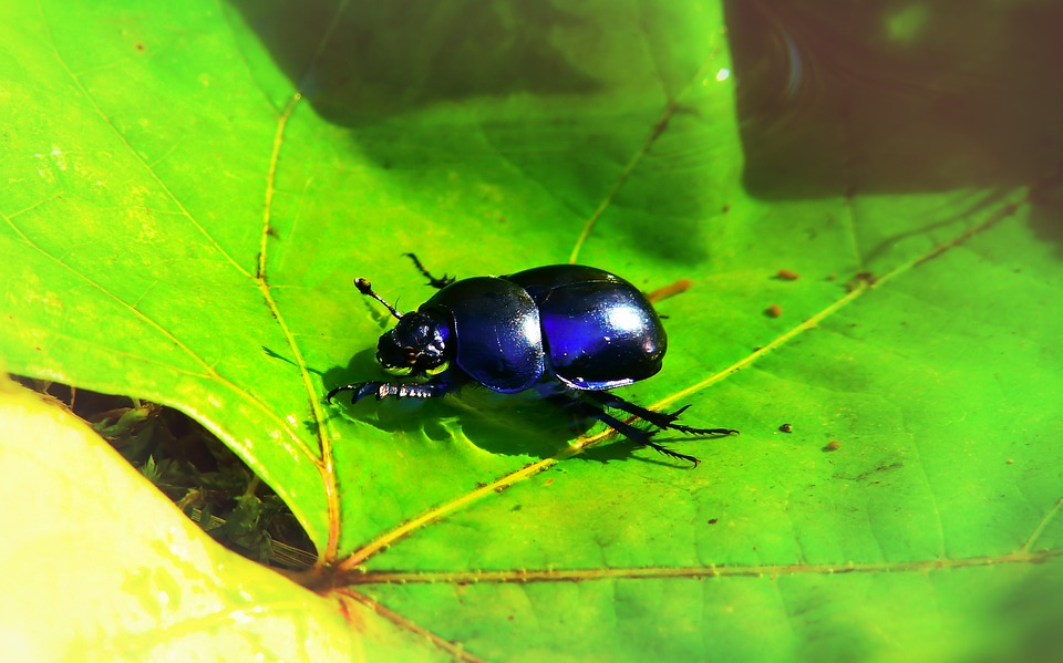 Forest Beetle, Insect, Leaf, Water, Rain, Swim, Animals