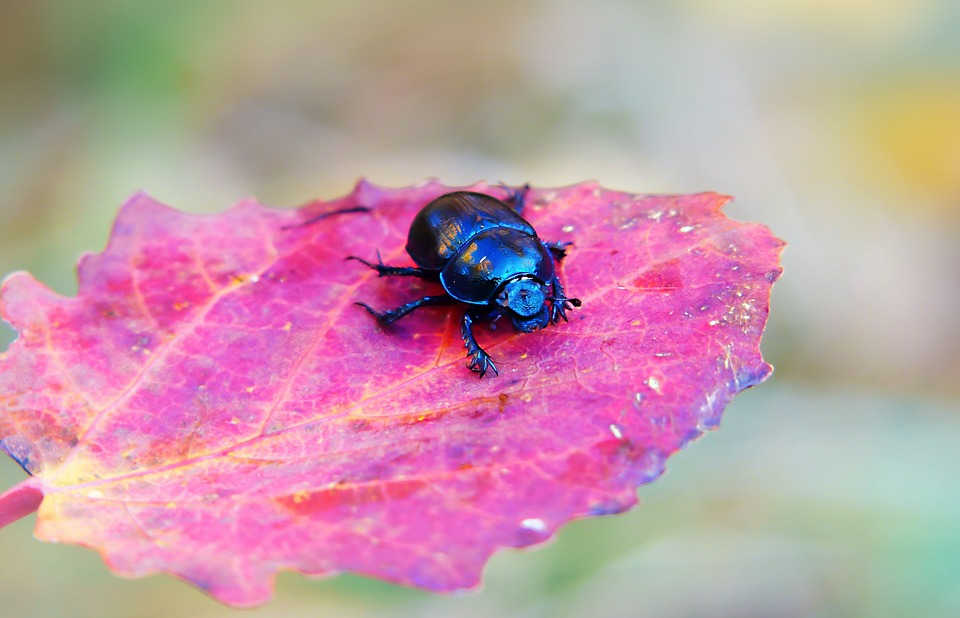 Forest Beetle, The Beetle, Leaf, Seasons Of The Year