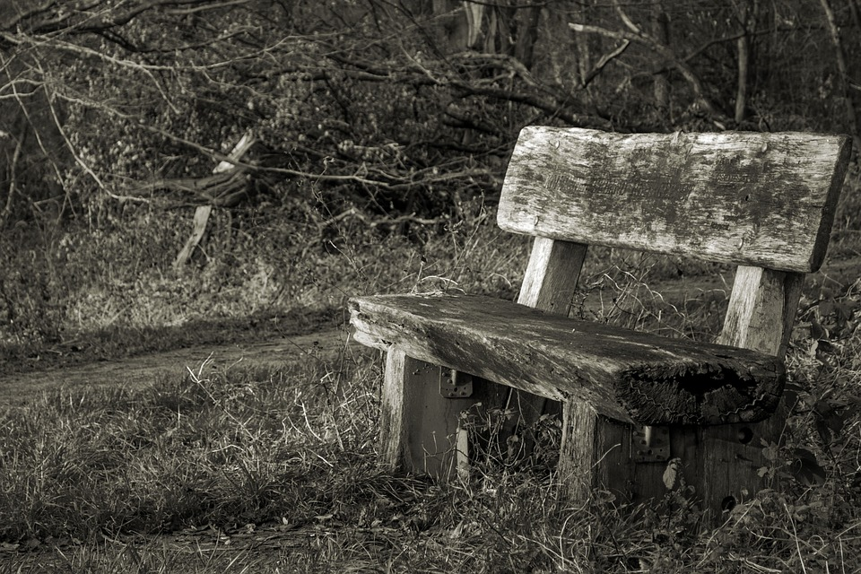 Bank, Forest, Bench, Nature, Benches, Rest, Silent