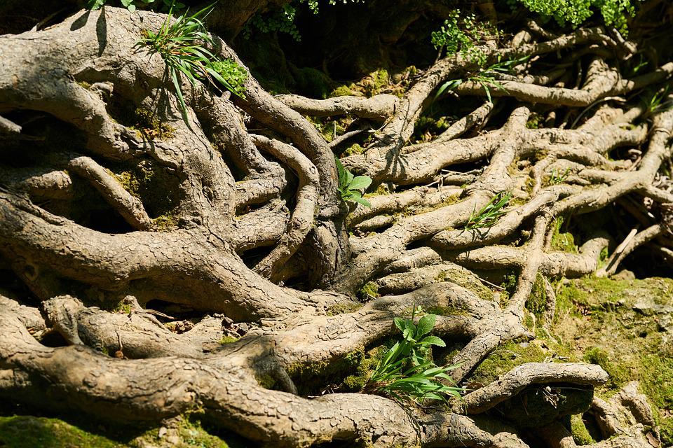 Tree, Root, Vein, Old, Strong, Big, Water, Forest