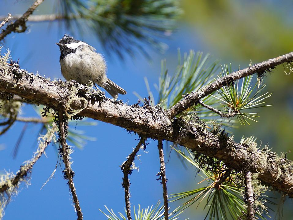 Tit, Tree, Bird, Young, Animal, Forest, Nature, Cute