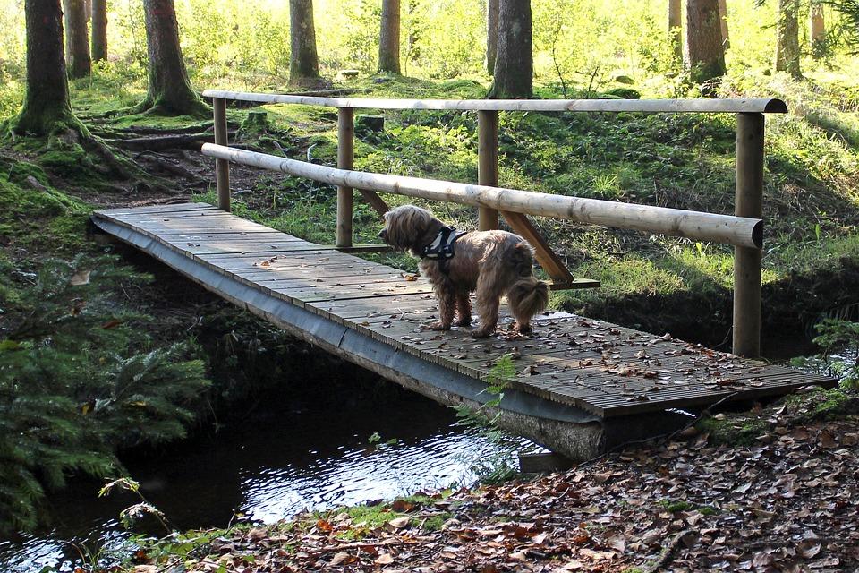 Web, Bridge, Bach, Water, Forest, Transition, Boardwalk