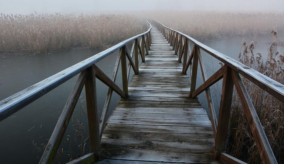 Fog, Forest, Catwalk, Bridge
