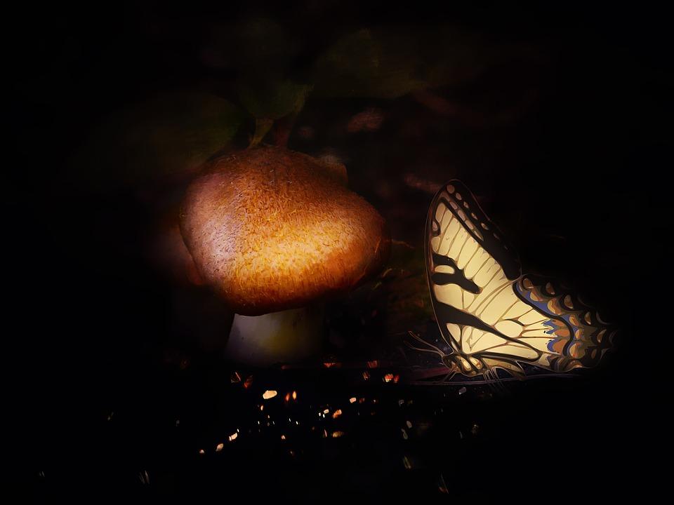 Forest, Dark, Mushroom, Brown, Butterfly, Fantasy