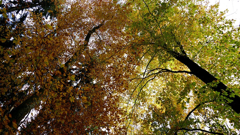 Landscape, Nature, Forest, Autumn, Trees, Canopy