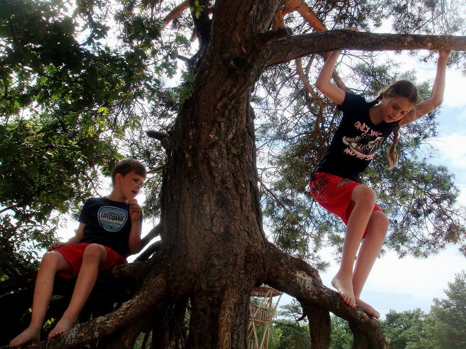 Children, Tree, Climbing, Work Together, Forest, Jump