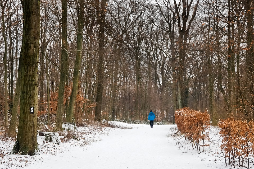 Forest, Winter, Nature, Snow, Landscape, Trees, Cold