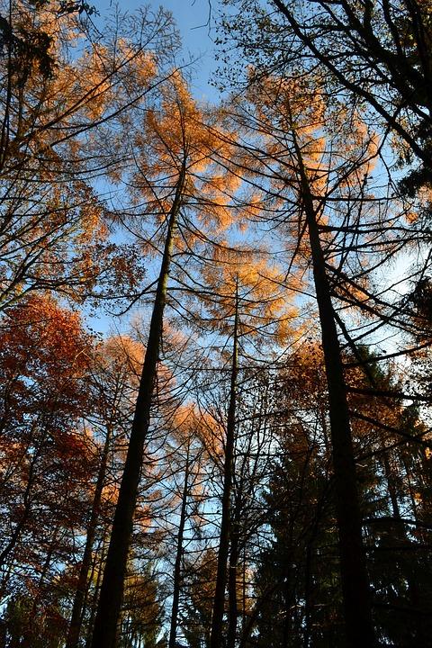 Autumn, Forest, Leaves, Fall Foliage, Fall Color