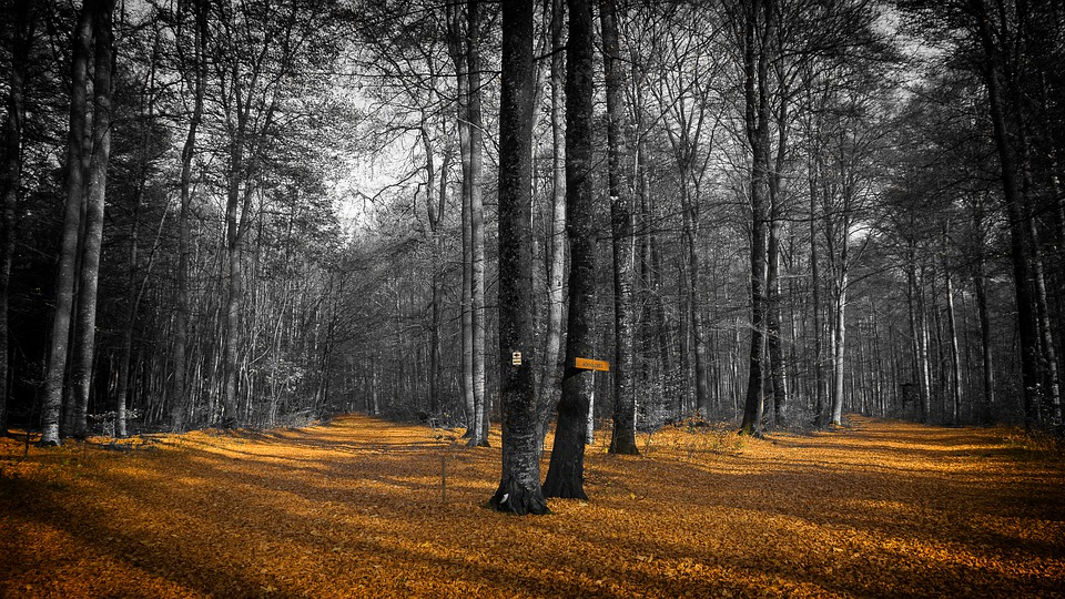 Autumn, Leaves, Forest, Fall Foliage, Golden Autumn