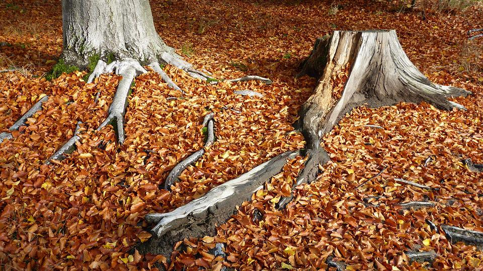 Fall Foliage, Log, Autumn, Forest, Forest Floor, Nature
