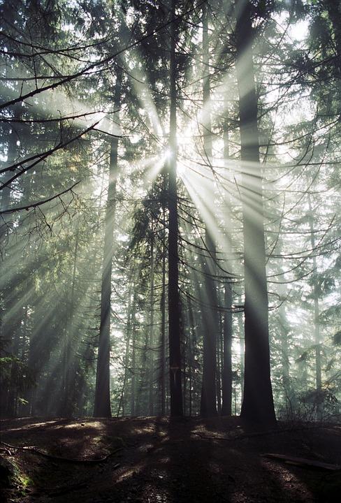 Sun, Forest, Mood, Tree, Fall Foliage, Light, Shadow