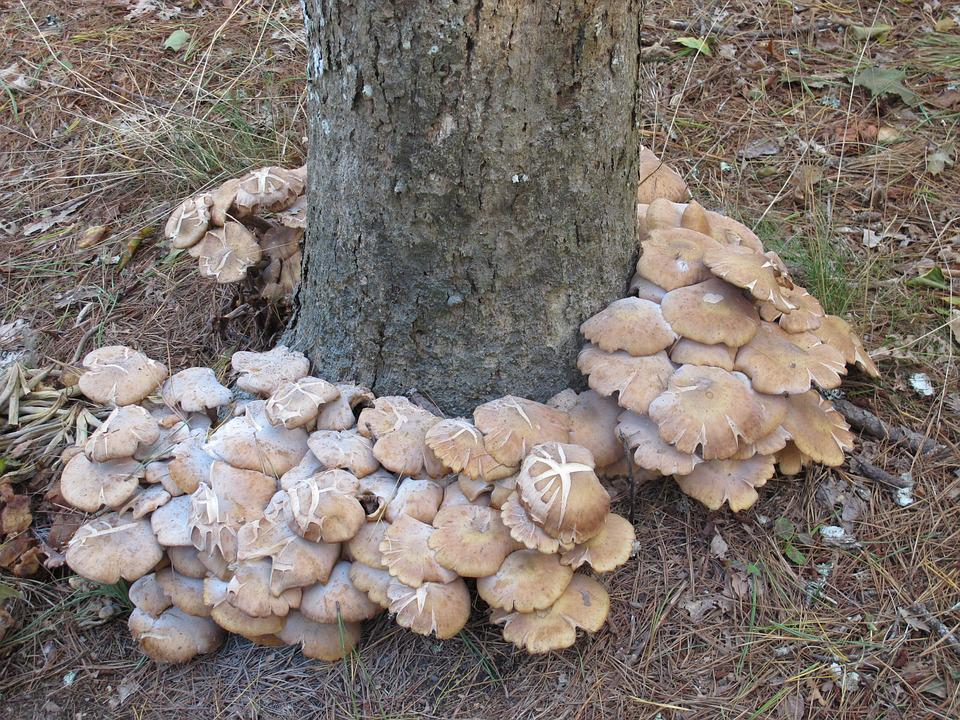 Mushrooms, Fall, Autumn, Season, Forest, Nature, Tree