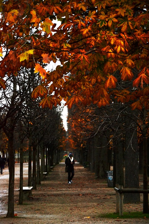Park, Forest, Tree, Fall, Leaves, Path, Nature, Man