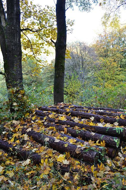 Autumn, Leaves, Autumn Forest, Forest, Forest Floor