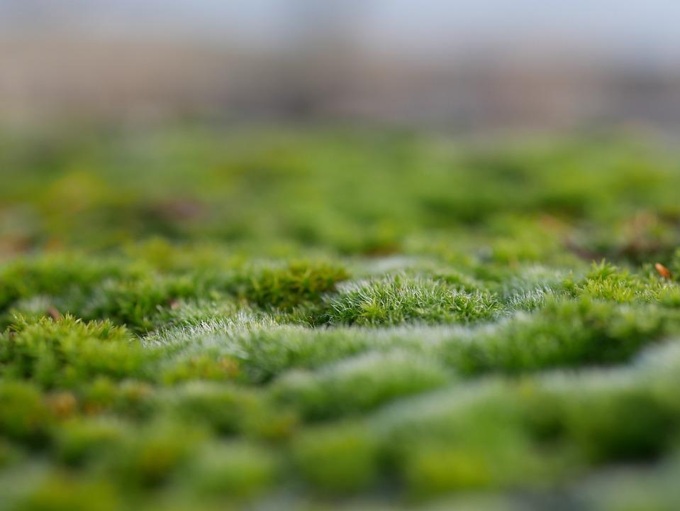 Moss, Nature, Forest, Forest Floor, Vegetation
