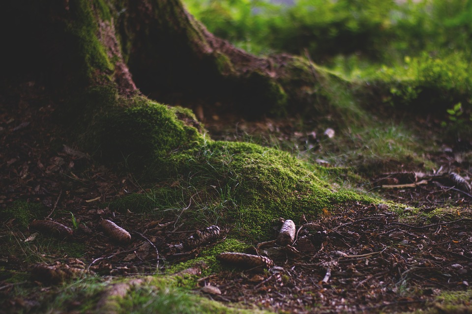 Forest, Forest Floor, Moss, Nature, Green, Root, Tribe