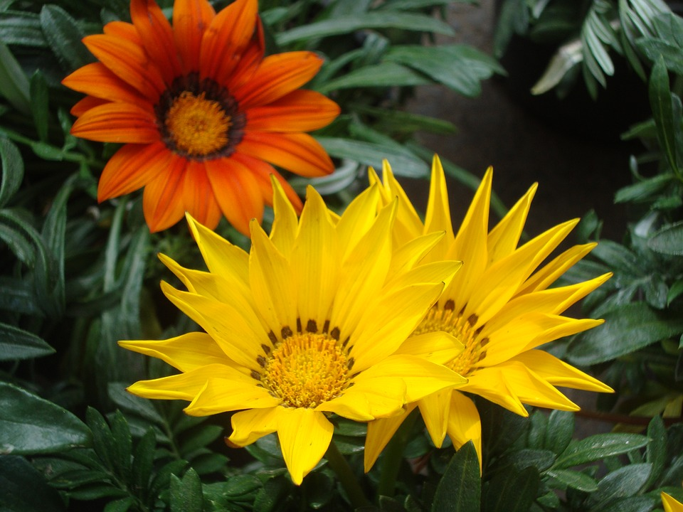 Flowers, Nature, Petal, Floral, Flowering, Forest