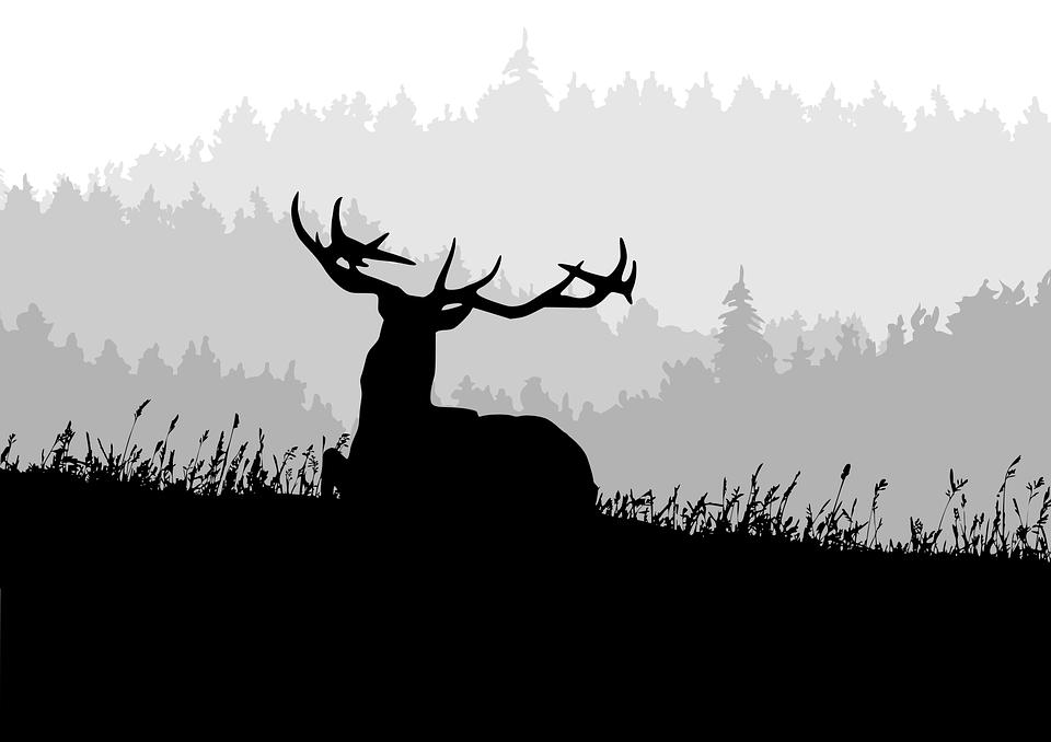 Hirsch, Forest, Mountains, Antler, Fog, Autumn, Haze