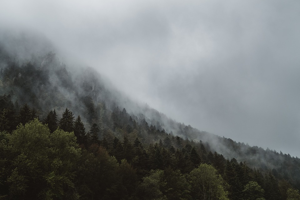 Fog, Haze, Forest, Foggy, Landscape, Mist, Mountain