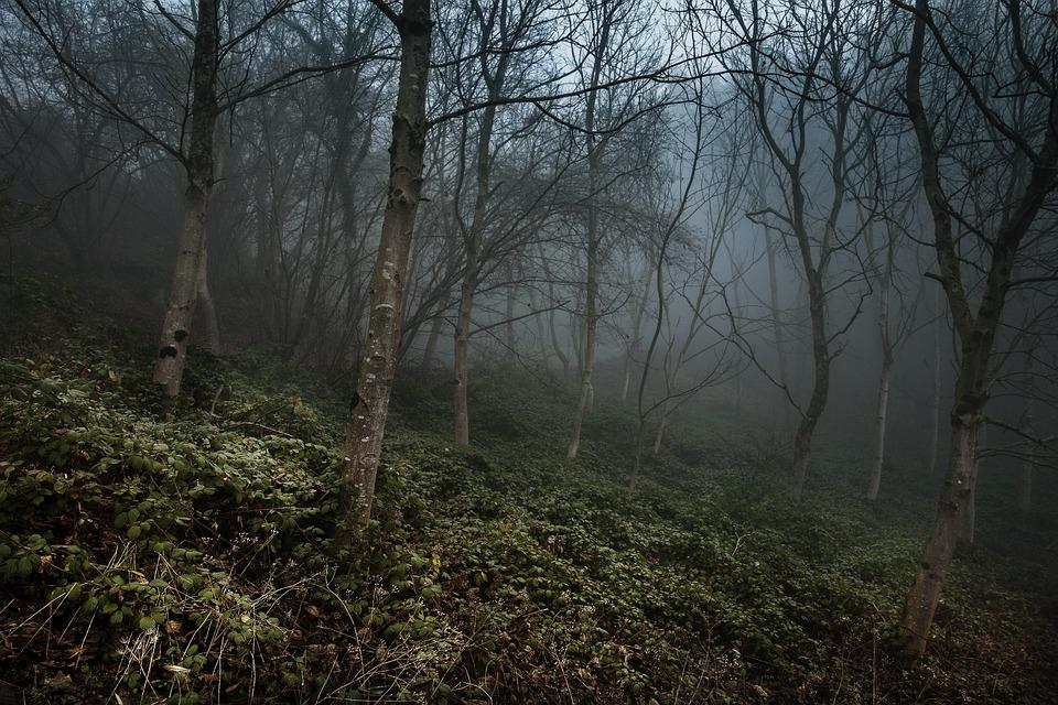 Foggy, Forest, Misty, Autumn, Mystery, Woods, Light