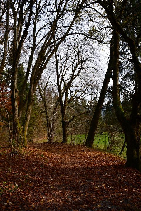 Autumn, Leaves, Forest, Nature, Forest Path, Autumn Day