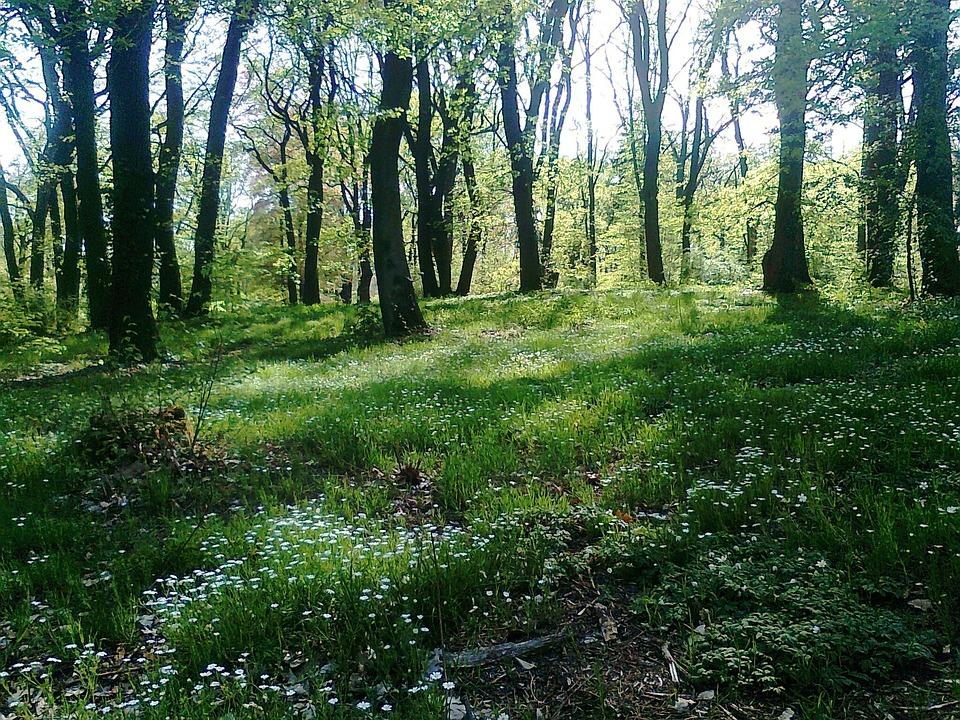 Glade, Forest, Spring, Babelsberg, Potsdam