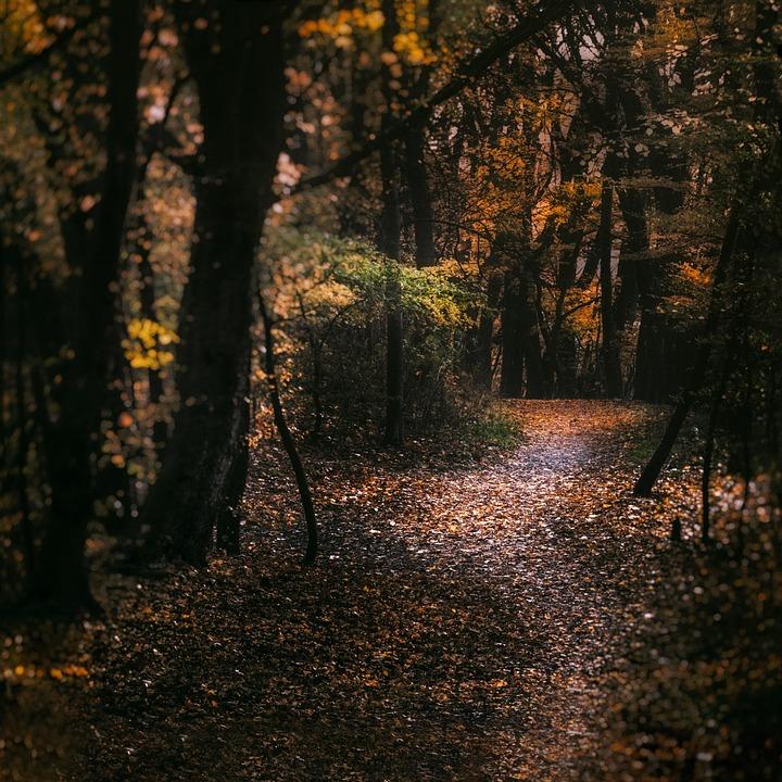 Autumn, Forest, Path, Away, Nature, Golden Autumn