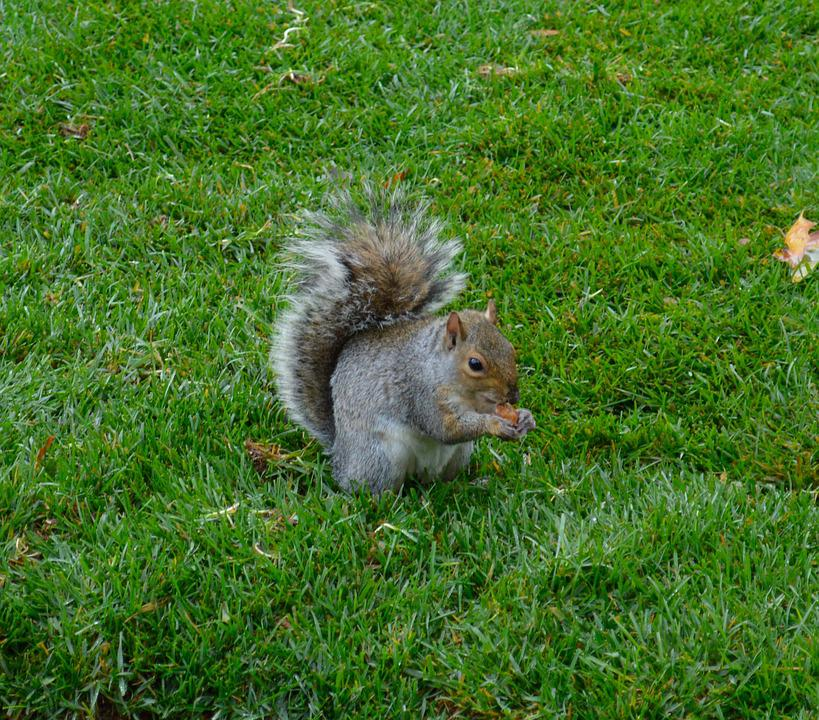 Squirrel, Animal, Green, Nature, Park, Forest, Creature