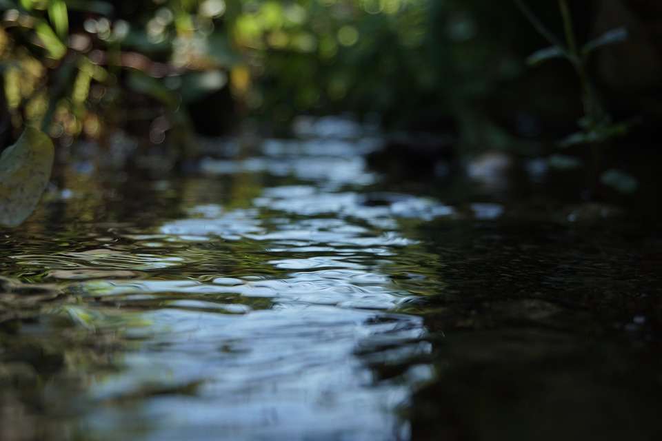 Water, River, Macro, Nature, Forest, Green, Environment
