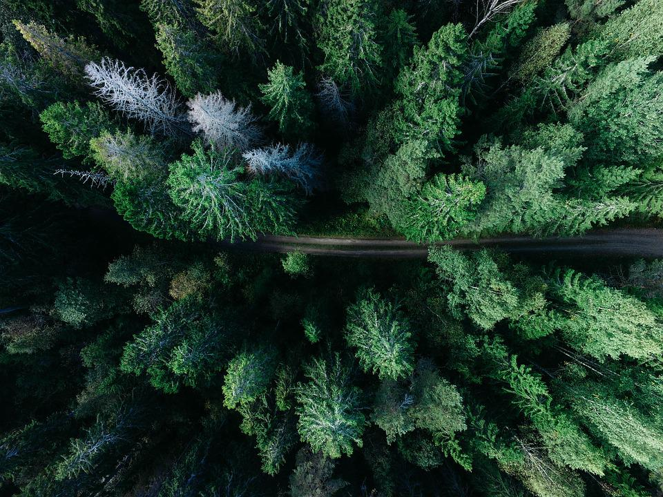Forest, Green, Landscape, Outdoors, Road, Trees, Woods