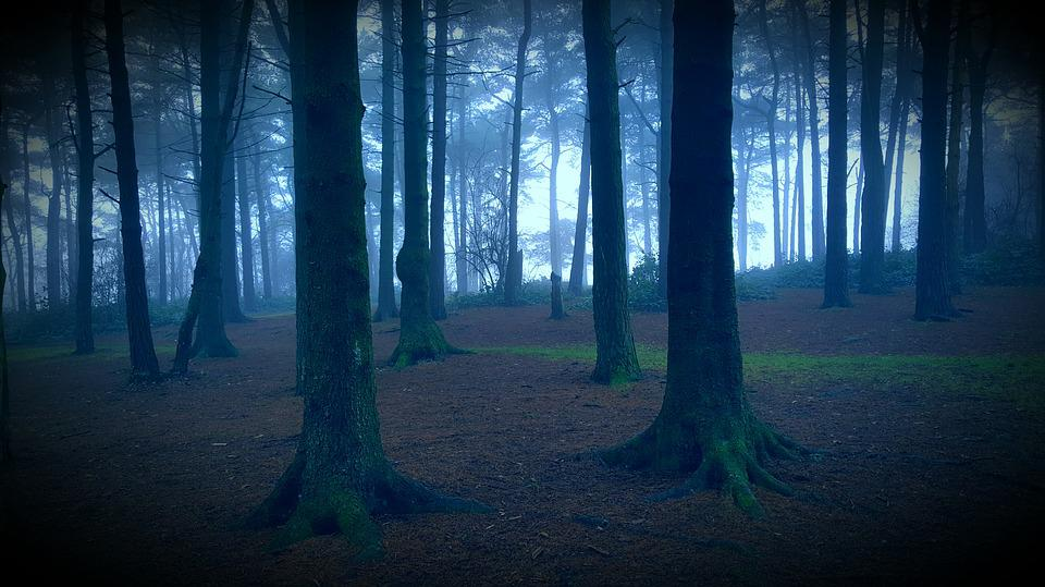 Spooky, Forest, Haunted