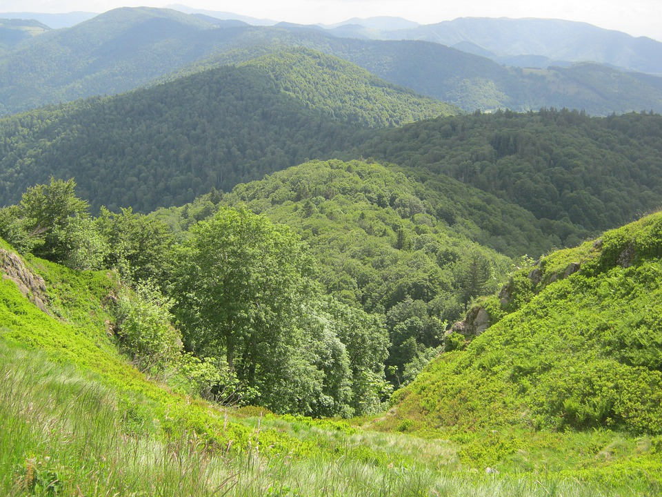Vosges, Hill, Forest, Hiking