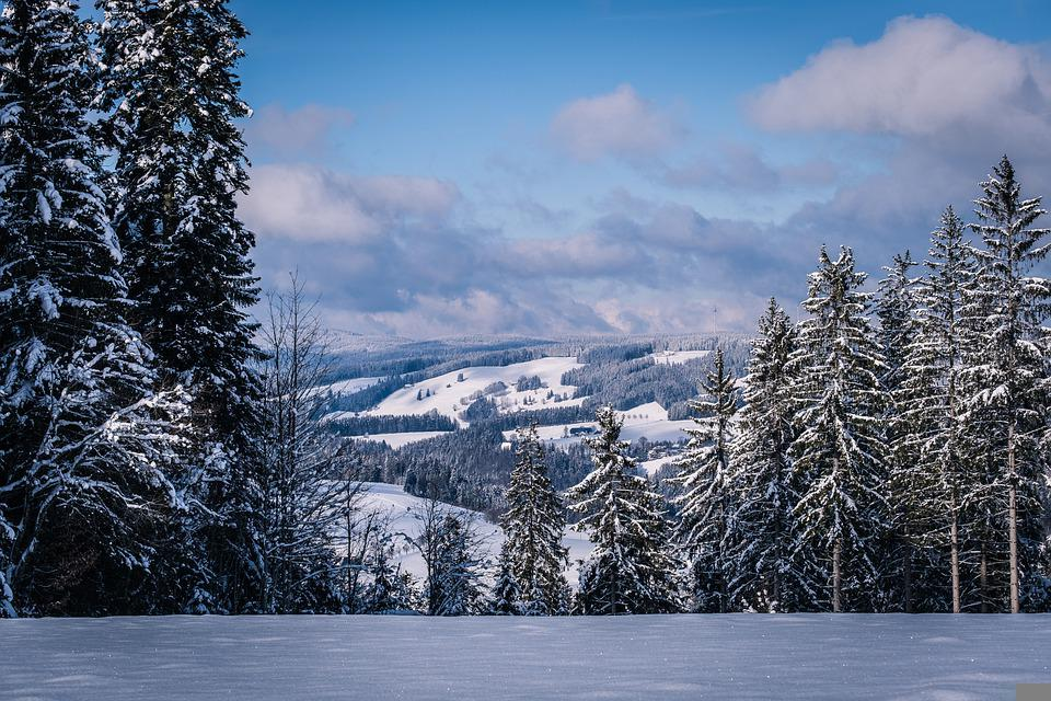 Forest, Hills, Snow, Panorama, Trees, Winter, Snowy