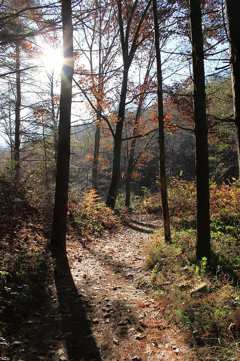 Forest, Trail, Trees, Plants, Into The Woods, Trunk