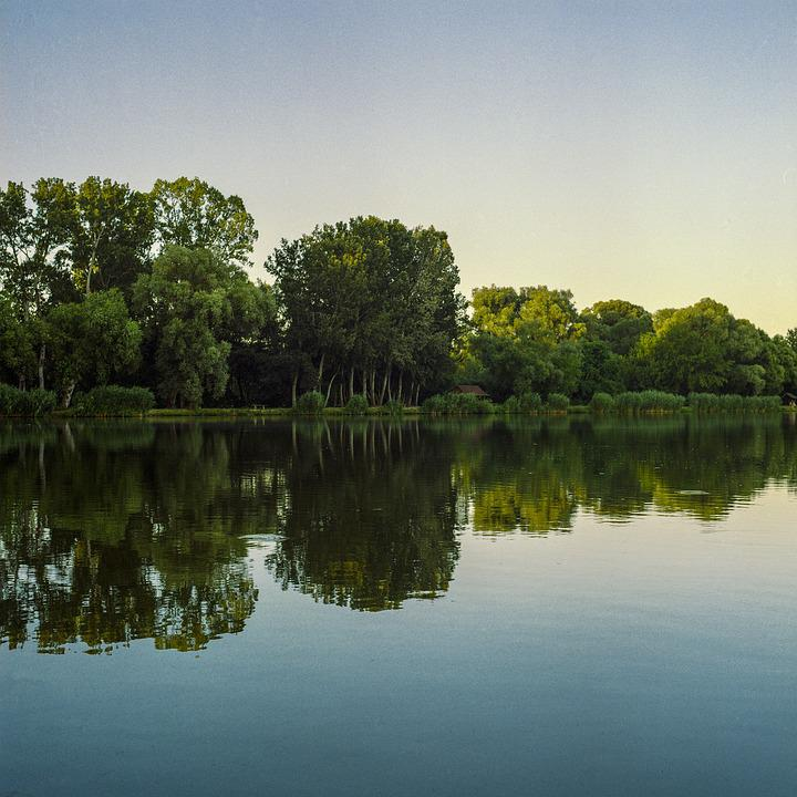 Lake, Reflection, Trees, Forest, Water, Landscape