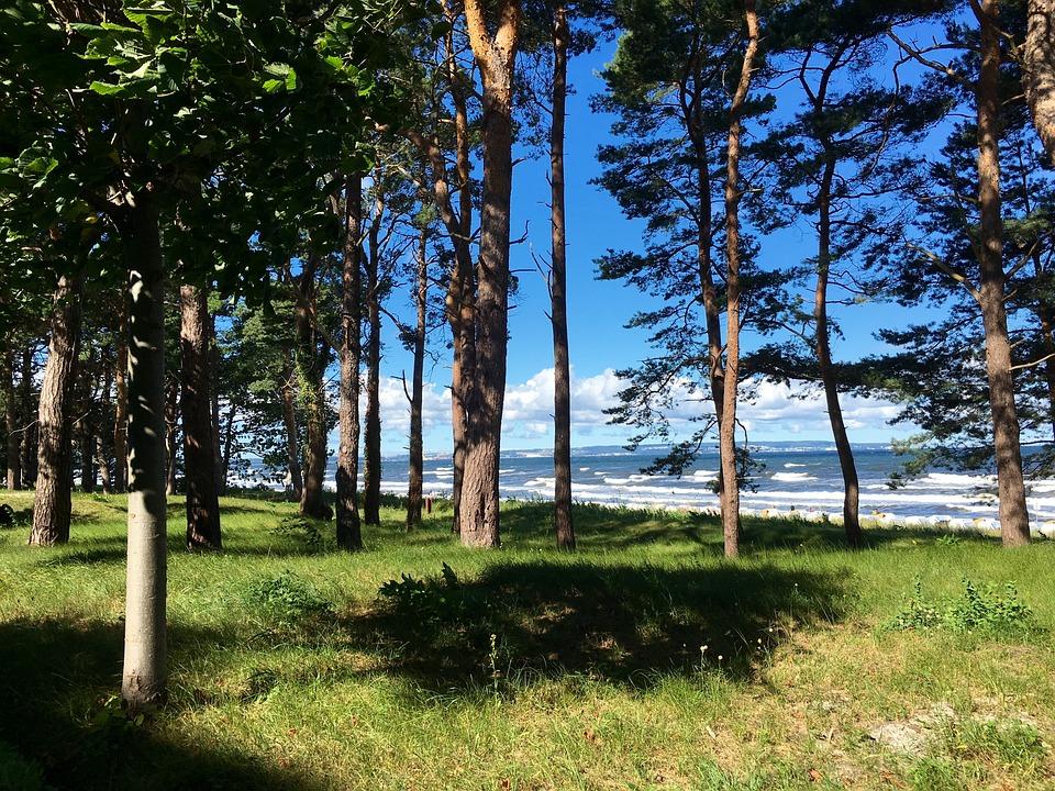 Sea, Forest, Lan, Landscape, Summer, Baltic Sea, Beach