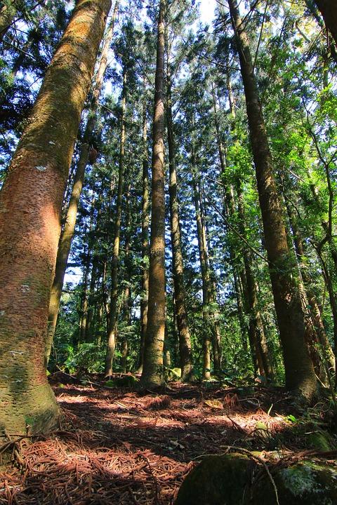 Woodland, Fam, Landscape, Forest