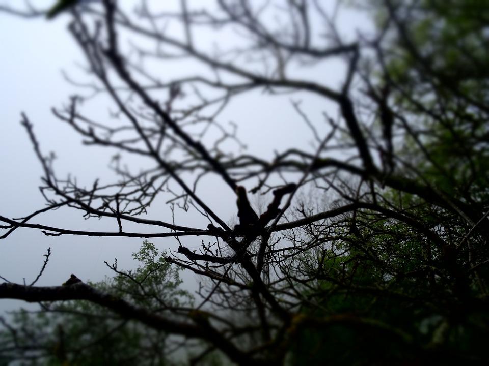 Tree, Fog, Forest, Nature, Mist, Forest Landscape