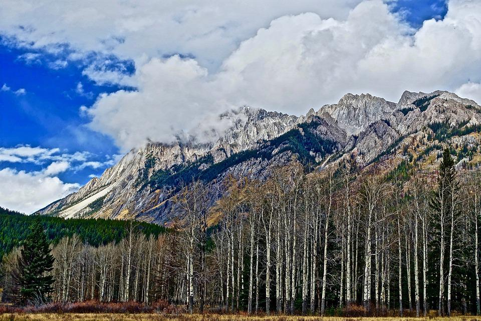 landscape mountains trees. trees mountains forest peaks landscape scenic a