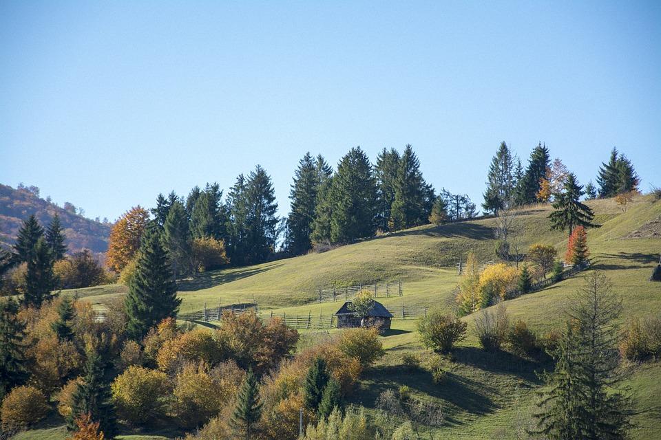 Nature, Green, Forest, Landscape, Leaves, Cloud, Sky
