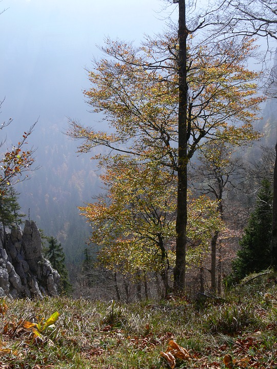 Landscape, Tree, Fall, Nature, Forest, Switzerland