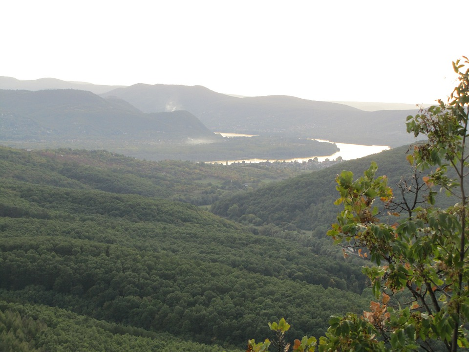 Forest, River, Danube, Water, Landscape, Lookout Tower