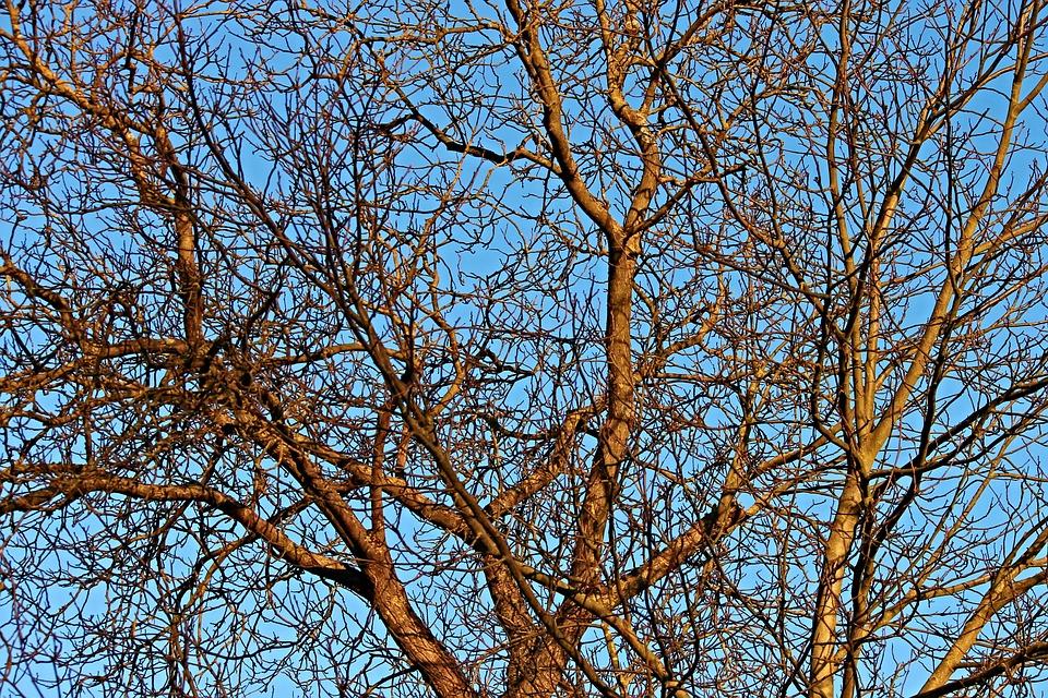 Aesthetic, Trees, Kahl, Nature, Landscape, Sky, Forest