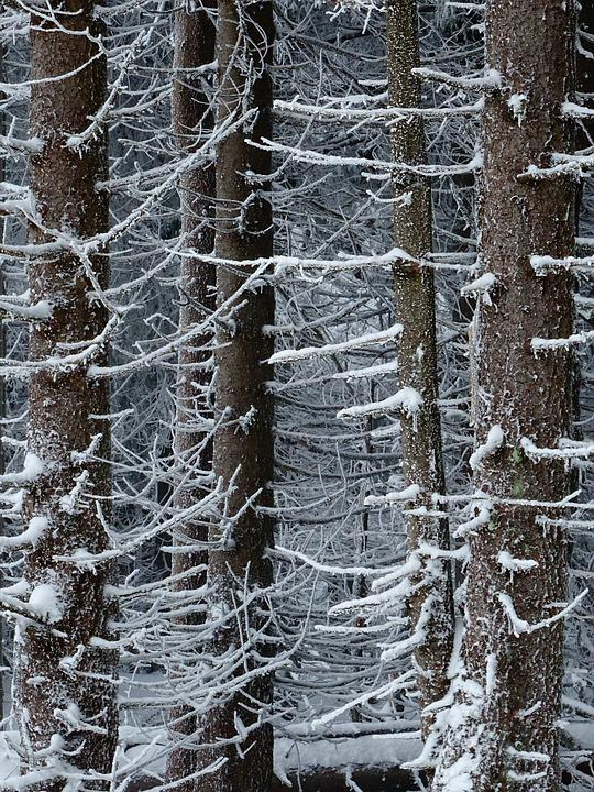Winter, Forest, Trees, Nature, Snow, Landscape, Cold