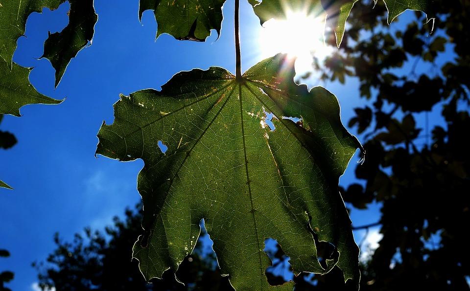 Leaf, Tree, Nature, Leaves, Forest, Green, Landscape
