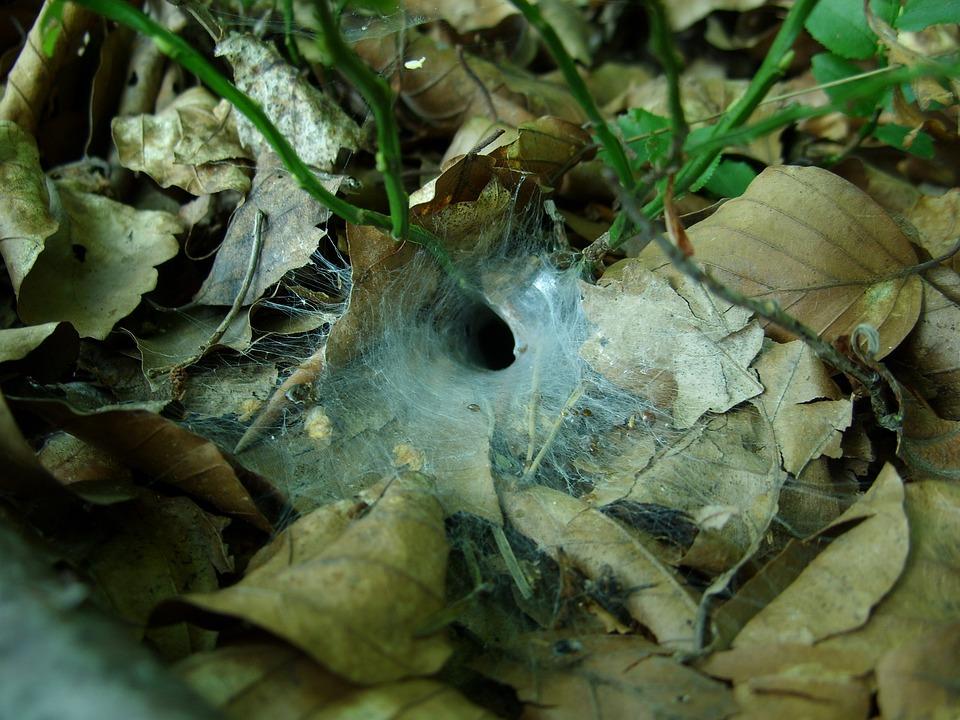 Forest, Cobweb, Foliage, Forest Litter, Macro