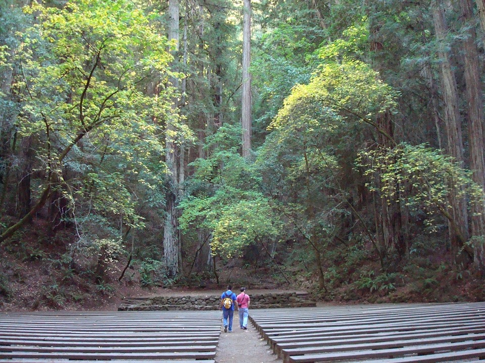Redwoods, Amphitheater, Forest, Stone, Majestic, Nature