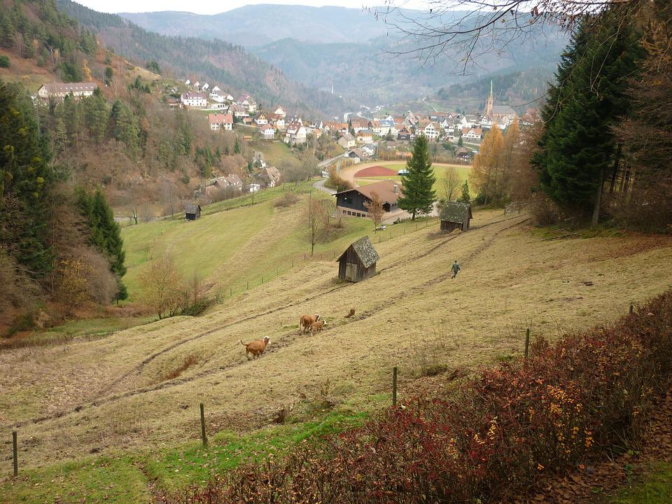 Meadow, Valley, Pasture, Hiking, Germany, Grass, Forest
